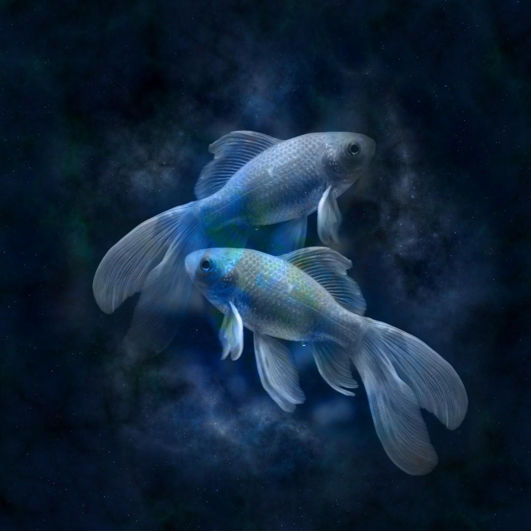 Мужчина рыба в любви: положительные и отрицательные стороны