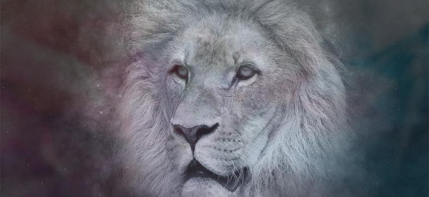 Мужчина-Лев в любви