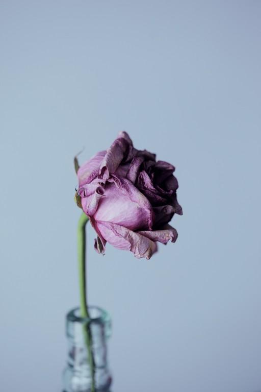 Можно ли простить предательство: а стоит ли рисковать?