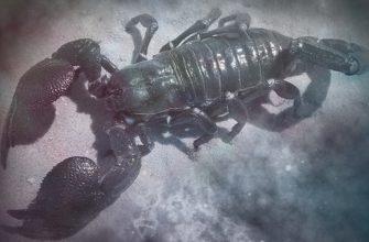 Мужчина скорпион в любви