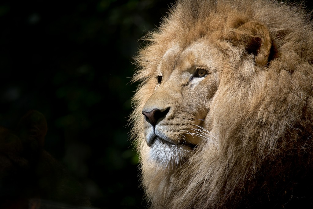 Как влюбить в себя мужчину льва: практическое руководство